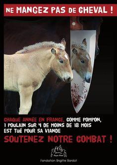 PARTAGE OF FONDATION BRIGITTE BARDOT........ON FACEBOOK............DO NOT EAT HORSE..............