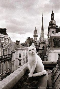 Imágenes de Gatos - Vol.7 (17 Fotos)