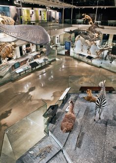 NATURAL HISTORY MUSEUM Los Angeles | The Age of Mammals - Came to visit during Cousins Camp, July 30, 2014