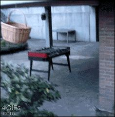 Way to encourage his/her laziness. | The Best Cat Gif Post In The History Of Cat Gifs