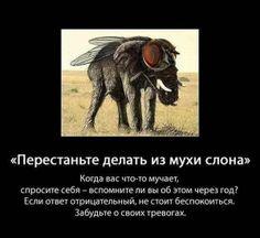 Перестаньте делать из мухи слона