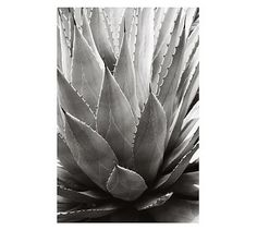 """Bedroom 1 Wall Art (Over Bed):  Agave by Alicia Bock, 28"""" x 48"""", Matted, Black Frame $199/ea"""