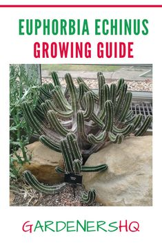 How to Grow Perennial Euphorbia Plant Genus members.