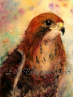 Broad winged hawk watercolor fine art by Ellen Brenneman Studio #hawk #raptor
