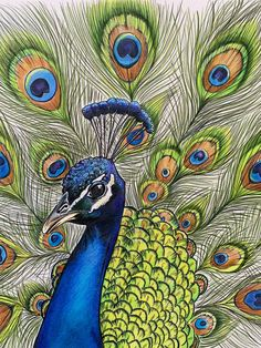 Peacock Drawing With Colour, Peacock Painting, Wood Painting Art, Mixed Media Painting, Peacock Artwork, Bird Drawings, Pencil Art Drawings, Colorful Drawings, Colored Pencil Artwork