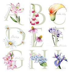 New Year, New work:) Beside painting cakes, flowers are my favourite things to paint! In the next couple weeks I will share the rest of my flowe Flower Alphabet, Alphabet Art, Letter Art, Watercolor Lettering, Hand Lettering, Watercolor Flowers, Watercolor Paintings, Inspiration Logo Design, Aquarell Tattoo