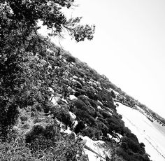 Stairs @ The Bluff - Barwon Heads  #barwonbluff #nature #health #outdoors #bnw  #aguideto #aguidetobarwonheads #barwonheadscafes  #smallbusiness #shoplocal #livelovelocal  #photography #ocean #beach #surf #art #summer  #barwonheads #oceangrove #bellarine #bellarinepeninsula #gtown #geelong #melbourne #visitvictoria #tourismgeelong #australia #seeaustralia #visitgeelongbellarine #melbournetouristguide by a_guide_to_barwonheads http://ift.tt/1JO3Y6G