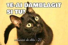 Poems, Cats, Sweet, Animals, Pisa, Gatos, Animales, Kitty Cats, Animaux