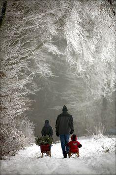 Winter Szenen, I Love Winter, Winter Walk, Winter Magic, Winter Time, Winter Christmas, Christmas Tree, Simple Christmas, Christmas Scenery