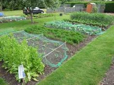 A no dig allotment (image courtesy of the Good Gardeners Association)