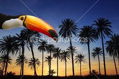 Pássaro de Tucano toco em palmeira tropical árvore do sol céu — Imagem de Stock #5124267