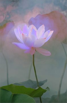 Surreal Lotus Flower - DD0A1560-1-1000 | Flickr – Condivisione di foto!