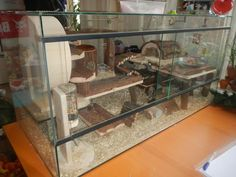 Explore photos on Photobucket. Explore photos on Photobucket. Hamster Tank, Hamster House, Hamsters, Rodents, Pet Pigs, Guinea Pigs, Gerbil Cages, Platform Swing, Hamster Habitat