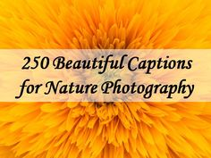 Read and share our collection of 250 Beautiful Caption for Nature Photography. Find more at The Quotes Master, a place for inspiration and motivation. Photography Captions, Nature Photography Quotes, Vintage Nature Photography, Nature Photography Flowers, Nature Quotes, Flowers Nature, Image Photography, Beautiful Flowers, Beautiful Places