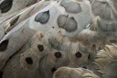 Wayward Girl | theiainteriordesign: Cape Barren Goose Feathers by camillaskye © All Rights Reserved