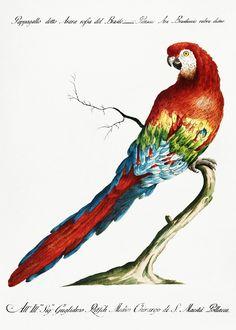 how do html color codes work Vintage Birds, Vintage Images, Vintage Bird Illustration, Badge Design, Bird Pictures, Exotic Birds, Free Illustrations, Flower Wallpaper, Antique Art