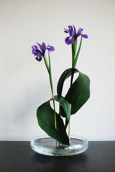 Ikebana 'Iris pas de deux' with 'ayame' (Japanese iris). Arrangements Ikebana, Ikebana Flower Arrangement, Beautiful Flower Arrangements, Fresh Flowers, Floral Arrangements, Beautiful Flowers, Exotic Flowers, Colorful Flowers, Purple Flowers