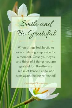 Heres a simple thing to do whenever you feel overwhelmed. Thinking about what you are grateful for can bring instant peace because it reminds you of the things you can be happy about. Focus on the good in your life, and let go of everything else. Grateful Quotes, Gratitude Quotes, Affirmation Quotes, Attitude Of Gratitude, Grateful Heart, Wisdom Quotes, Thankful, Crush Quotes, Quotes Quotes