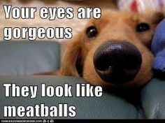 Your eyes are gorgeous, they look like meatballs #funnydog #dogmeme