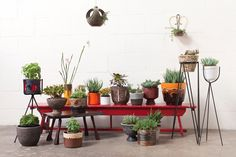 An eye-catching collection of vintage planters.