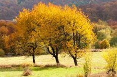 Pełna kolorów Połonina jesienią