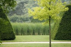 Formal Topiary and tall grasses.  Château de Pange - Lorraine | Louis Benech