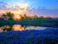 Texas beauty!
