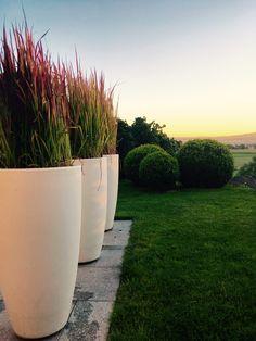 My Privat Garden #myelho #Elho #pure #red barron #MyPhotoShot
