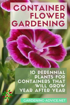Indoor Container Gardening Container Flower Gardening Tips - 10 Perennial Plants For Pots - Try these 10 perennials for container flower gardening and you don't have to replant your flower pots every year again and again! Indoor Vegetable Gardening, Container Gardening Vegetables, Organic Gardening Tips, Gardening Hacks, Gardening Quotes, Herb Gardening, Gardening Tools, Gardening Supplies, Flowers Perennials