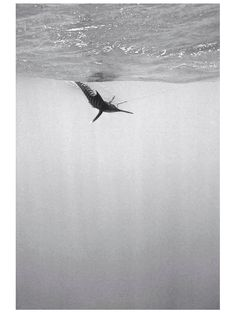 Chris Leidy Photography: Black and White: Bahama Blue  #ChrisLeidyPhoto #underwater #photography #ChrisLeidyPhotography #ocean #travel Website: http://www.leidyimages.com