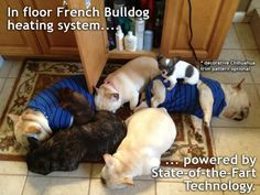 OMG I need at least 3 more Frenchies+ a Chihuahua to install this system