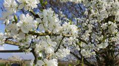 Best springtime lente images bloemen