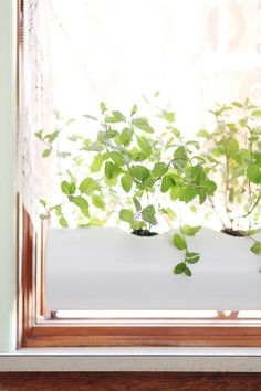 Keeping herbs alive during the winter can be a challenge—but it's definitely not impossible. Give your green thumb a shot with these DIY indoor herb planters.