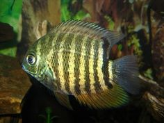 Black Severum: We call her Lil Miss