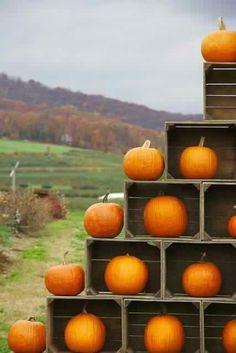 Orange You Glad It's Pumpkin Season? Orange You Glad It's Pumpkin Season? Pumpkin Wedding, Fall Wedding, Autumn Weddings, Fall Inspiration, Pumpkin Farm, Pumpkin Pics, Pumpkin Garden, Happy Fall Y'all, Fall Photos