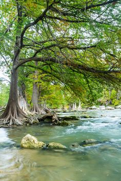 Guadalupe River / Photo by Ellie Teramoto
