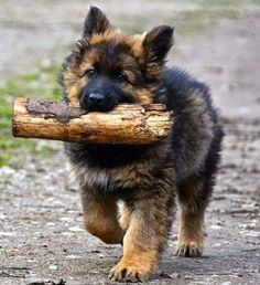 "That's a big ""stick"" you've got there...."