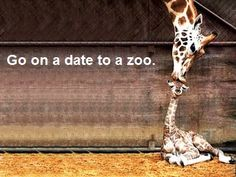 Baby Animals Giraffe Kiss Wallpapers Resolution : Filesize : kB, Added on March Tagged : baby animals Love You More Than, All You Need Is Love, Just For You, My Love, Baby Animals, Cute Animals, Wild Animals, Funny Animals, Funny Animal Pictures