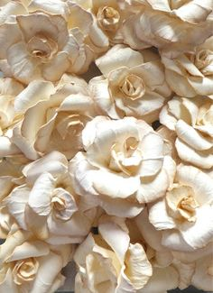 Cream Paper Rose Tut