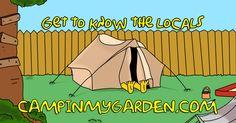 Camp in Springfield!  campinmygarden.com