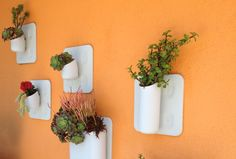 Container gardening with drought resistant plants Drought Resistant Plants, Candle Sconces, Container Gardening, Wall Lights, Home And Garden, Backyard, Fashion News, Blog, Inspirational