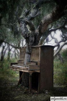 Дерево, проросшее через пианино
