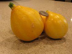 Lemon Squash on trellis