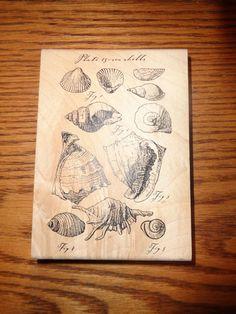 Tin Can Mail - Large - Sea Shells - Rubber Stamp - Inkadinkado - Scrapbooking