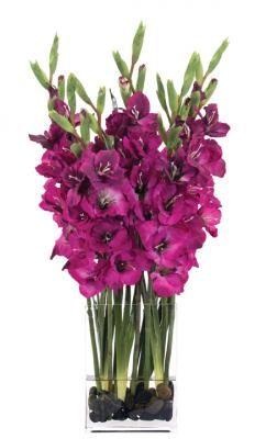 NDI  Gladiola Purple | Glass Rectangle