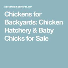 Chickens for Backyards: Chicken Hatchery & Baby Chicks for Sale Chicks For Sale, Buy Chickens, Baby Chicks, Backyards, Chicken Coops, Coops, Chicken Coop Run, Backyard