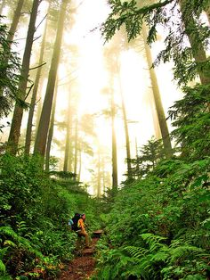 west coast trail, british columbia, canada.. a must for sure