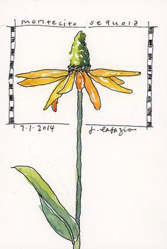 cone flower cone flower - original watercolor by Jane LaFazio Watercolor Sketchbook, Art Sketchbook, Watercolor And Ink, Watercolor Flowers, Watercolor Paintings, Watercolours, Sketchbook Prompts, Sketchbook Challenge, Sketch Journal