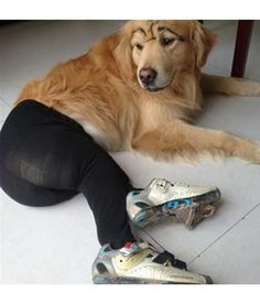 Our poor canine friends are now facing a new threat: Theyre being dressed up in pantyhose for photos shared on Chinese social media sites. (And high-heeled shoes seems to make it worse.) Hey, China: We dare you to try this with a cat. Dog Wearing Pantyhose, Funny Dogs, Funny Animals, Cute Animals, Crazy Animals, Animal Funnies, Dogs In Tights, Dog Pictures, Animals