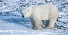 Efectos del calentamiento global en los hábitats de los animales . El calentamiento global es causado por el ser humano y por la naturaleza. Involucra un aumento sutil y no tan sutil de la temperatura de la tierra y los océanos. Esto afecta los hábitats de los animales alrededor del mundo. Algunos hábitats ya han sufrido cambios biológicos a causa del calentamiento global, otros sufrirán estos cambios en las ...